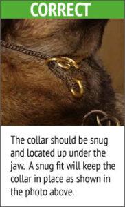 domdog-correct